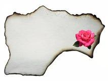 与桃红色玫瑰的羊皮纸 免版税图库摄影