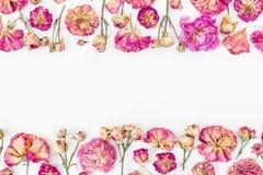 与桃红色玫瑰的花卉框架在白色背景,平的位置,顶视图 免版税图库摄影