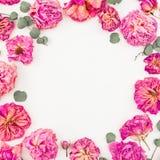与桃红色玫瑰的花卉花圈在白色背景隔绝的框架和玉树,舱内甲板位置,顶视图 免版税图库摄影