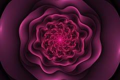 与桃红色玫瑰的黑背景在中心 螺旋花tex 库存例证