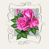 与桃红色玫瑰花的浪漫花卉背景 免版税库存照片