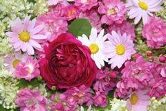 与桃红色玫瑰,雏菊的五颜六色的花背景 免版税库存照片