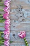 与桃红色白色郁金香的老灰色蓝色木背景连续毗邻和与木春天夏天蝴蝶的空的拷贝空间 库存照片