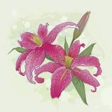 与桃红色百合花束的贺卡  免版税库存图片