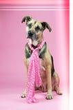 与桃红色的狗 免版税库存照片
