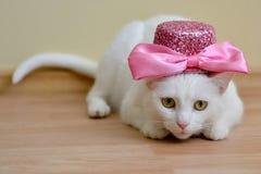 与桃红色盖帽的白色猫 图库摄影
