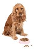 与桃红色碗的好的狗 免版税库存图片