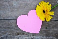 与桃红色纸心脏的一朵黄色大丁草花在木头 免版税库存照片