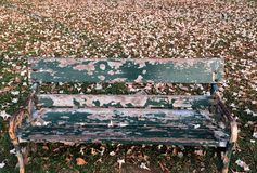 与桃红色花下落的老唯一长的椅子报道了地面 免版税库存照片