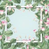 与桃红色花和叶子的美好的植物的框架在淡色蓝色背景 图库摄影
