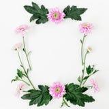 与桃红色花和叶子的花卉框架在白色背景 平的位置,顶视图 情人节构成 图库摄影