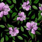 与桃红色花和木兰绿色叶子分支的无缝的传染媒介样式  库存图片