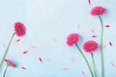 与桃红色花和瓣的美好的春天背景 花卉框架构成系列 平的位置样式 免版税库存照片