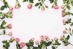 与桃红色花玫瑰的圆的框架发芽,分支和在白色背景隔绝的叶子 平的位置,顶视图 库存照片