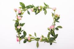 与桃红色花玫瑰的圆的框架发芽,分支和在白色背景隔绝的叶子 平的位置,顶视图 免版税库存照片