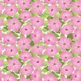 与桃红色花的无缝的纹理 库存图片