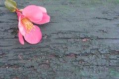 与桃红色花的木背景 免版税库存照片