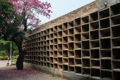 与桃红色花的树在有细胞的墙壁附近 库存照片