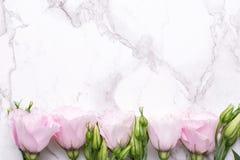 与桃红色花的浪漫背景在大理石桌上 图库摄影