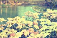 与桃红色花的瀑布 免版税库存图片