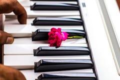 与桃红色花的爱情歌曲钢琴 库存照片