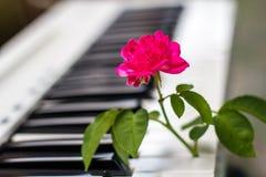 与桃红色花的爱情歌曲钢琴 库存图片