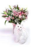 与桃红色花的白色猫姿势 免版税库存图片