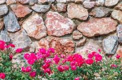 与桃红色花的石墙 图库摄影