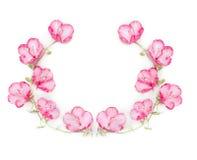 与桃红色花的花卉花圈在白色背景 库存照片