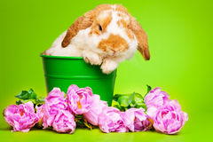 与桃红色花的逗人喜爱的兔宝宝坐在罐里面 库存照片