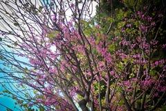 与桃红色花的结构树 库存图片