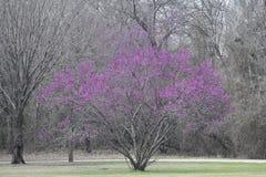 与桃红色花的结构树 免版税库存图片