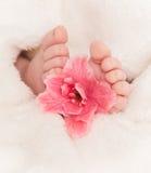 与桃红色花的Babyfeet 图库摄影