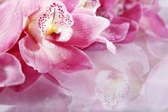与桃红色花的Wellnes近景 免版税库存照片