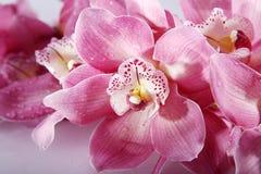 与桃红色花的Wellnes近景 免版税库存图片