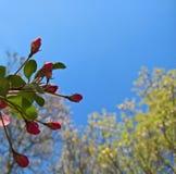 与桃红色苹果开花的春天框架 库存照片