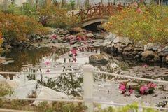 与桃红色荷花星莲属莲花的美好的风景在湖 免版税图库摄影