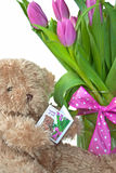 与桃红色郁金香的玩具熊 免版税库存图片