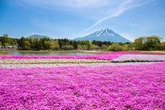 与桃红色青苔佐仓或有山的富士山梨,日本樱花的领域的日本Shibazakura节日 免版税库存照片