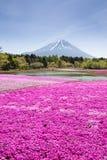 与桃红色青苔佐仓或有山的富士山梨樱花的领域的日本Shibazakura节日 库存图片