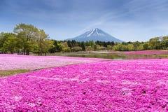 与桃红色青苔佐仓或有山的富士山梨,亚帕樱花的领域的日本Shibazakura节日 免版税库存照片