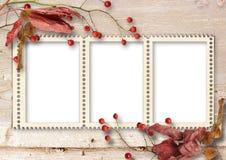 与框架的秋天木背景的照片和花揪 免版税库存照片