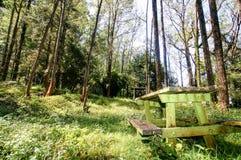 与桌的一条绿色长凳在森林区域 库存图片