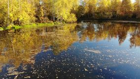 与桦树、池塘和反射的俄国秋天风景 影视素材
