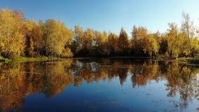 与桦树、池塘和反射的俄国秋天风景 股票录像