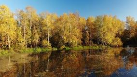 与桦树、池塘和反射的俄国秋天风景 股票视频