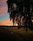 与桦树剪影的早有雾的日出在前面 图库摄影