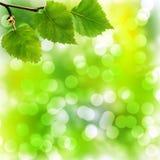 与桦树叶子的软的Bokeh背景 库存照片