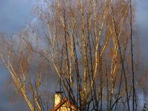 与桦树和屋顶的异常的轻的心情 免版税库存图片