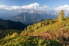 与桦树森林和山脉的秋天风景 库存图片